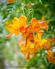 B36C6336 (WolfeMcKeel) Tags: park new city vacation flower nature gardens garden mexico botanical spring high flora downtown desert landscaping albuquerque flowering 2016