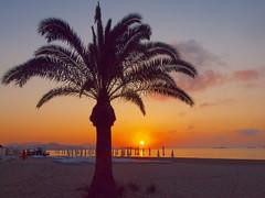 palme und sonnenschirme P5199390 (hlh 1960) Tags: sun colour sol beach water strand sunrise soleil meer wasser outdoor urlaub hills berge ibiza sonne stillness palme spanien farben espania holyday stille mittelmeer ruhe jungles
