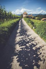 (c) Wolfgang Pfleger-6981 (wolfgangp_vienna) Tags: italien shadow italy green del vineyard strada vine vineyards grn schatten vino sdtirol wein altoadige weinstock eppan weinstrasse weingarten kaltern missian stradadelvino kalterersee weinstrase weinterrasse