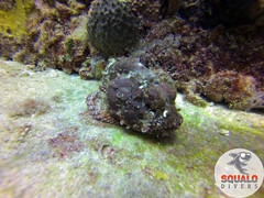 Scuba Diving-Miami, FL-Jun 2016-15 (Squalo Divers) Tags: usa divers florida miami scuba diving padi ssi squalo divessi