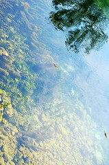 Transparency [Polcenigo - 2 July 2016] (Doc. Ing.) Tags: 2016 polcenigo pordenone pn nordest friuli friuliveneziagiulia italy livenza gorgazzo river water reflection paldilivenza watercourse fvg