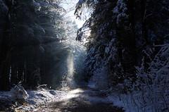Winter Sonnenstrahlen (Aah-Yeah) Tags: schnee winter snow forest wald sonnenschein achental chiemgau lichtblick
