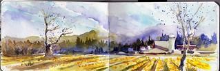 Daffodil field, Mt Vernon