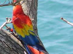 hula hoop sat 073 (Learn, Love, Conserve) Tags: hulahoop saprissa puntaleona feriaverdearanjuez