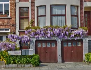 La maison aux glycines - The house of wistarias