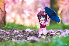 Hanami with Anne (elZephon) Tags: pink anime japan olympus kawaii yukata cherryblossom otaku printemps hanami cerisier sping kotobukiya toyphotography figurephotography cupoche elzephon