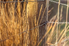 The morning sun when its in your eyes, really shows your age.... (jenni 101) Tags: grass fence wire dof bokeh hss hff fencefriday