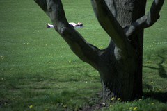 Tulipan (4) (pixpressionismus) Tags: berlin nackt mai grn baum neuklln buga britz sonnenbaden britzergarten sonya6000 pentax11070mm