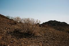 5R6K2502 (ATeshima) Tags: arizona nature havasu