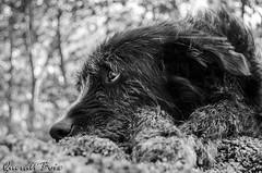 Black (Queralt jqmj) Tags: dog pet black animal perro mascota gos