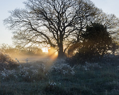 Norra land XI (Gustaf_E) Tags: sea mist tree landscape sweden sverige dis trd hav vr land morgon landskap dimma grankulla landsbygd lngeerik grankullavik norraland otus1455