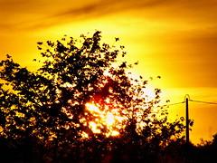 (K@spa) Tags: joo reganha jooreganha kspa moura alentejo sunset prdosol sky cu orange yellow amarelo laranja sol sun