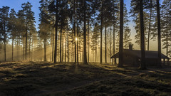 Where there is light... (PixPep) Tags: charlottenberg light forest nature trees landscape pixpep tallmon sverige sweden