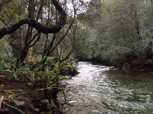 Liffey Falls State Reserve