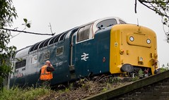 55007 Barrow Hill 0Z55 - 13/6/16 (deltic17) Tags: diesel napier pinza deltic englishelectric barrowhill royalscotsgrey 55022 barrowhillroundhouse 55007 heritagediesel 0z55