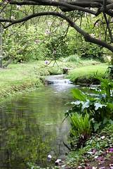 Ruscello (sz1507) Tags: flowers verde primavera water alberi garden spring fiori acqua ruscello piante calma rami giardino ninfa d60 torrente vegetazione allaperto nikond60 giardinidininfa