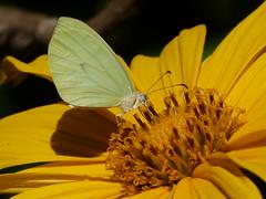 (IgorCamacho) Tags: flower macro nature colors butterfly cores details natureza flor borboleta detalhes