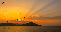 Flight to the Sun *ExpLorE* (Panos kanderes) Tags: