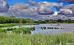An der selitzer Wiek (garzer06) Tags: grn wolken himmel wolkenhimmel naturephoto landschaftsfoto deutschland inselrgen mecklenburgvorpommern insel vorpommern blau weis landschaftsbild naturfotografie landschaftsphotography wasser baum