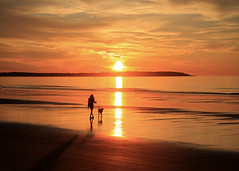 Just me and my friend and a new day (Patricia McAtee - Photos of Maine) Tags: beachwalk dog ocean sunrise sunlight sun serene serenity quiettimes