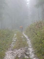 Quel temps! (Franois Magne) Tags: wild camp color nature montagne landscape wolf pluie conservation loup brouillard mouton chiens berger sauvage somme transhumance bte patou ferus pastoralisme patous btedesomme pastoraloup