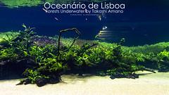Details-13 (Filipe Oliveira (FAAO)) Tags: plant aquarium underwater lisboa lisbon details exhibition aquatic filipe forests oceanarium takashi exposio amano oceanrio oliveira planted florestas faao submersas 40mt