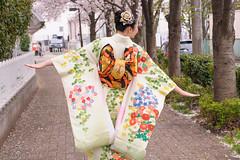 DS7_0400.jpg (d3_plus) Tags: street portrait sky woman plant flower nature girl japan walking spring nikon scenery bokeh outdoor dusk fine daily telephoto human bloom  cherryblossom  sakura tele streetphoto kimono nikkor     dailyphoto   kawasaki  thesedays 80200mm 80200      fineday     8020028 japanesekimono 80200mmf28d  80200mmf28     80200mmf28af  d700  kanagawapref  nikond700  afzoomnikkor80200mmf28 afzoomnikkor80200mmf28s aiafzoomnikkor80200mmf28s aiafzoomnikkor80200mmf28sed bestcloth