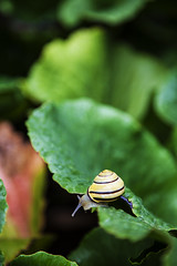lil`snail_large_leaf (sascha ungerer fotografie also on Facebook) Tags: naturaleza verde green hoja nature wet yellow forest garden grande leaf woods klein little small natur large shell snail vegetable fresh amarillo gelb bosque sascha grn lush blatt wald salat garten fresco schnecke delicioso poco caracol vegetal gros luscious gemse jardn frisch mojado nass schale ungerer saftig cscara exuberante ppig