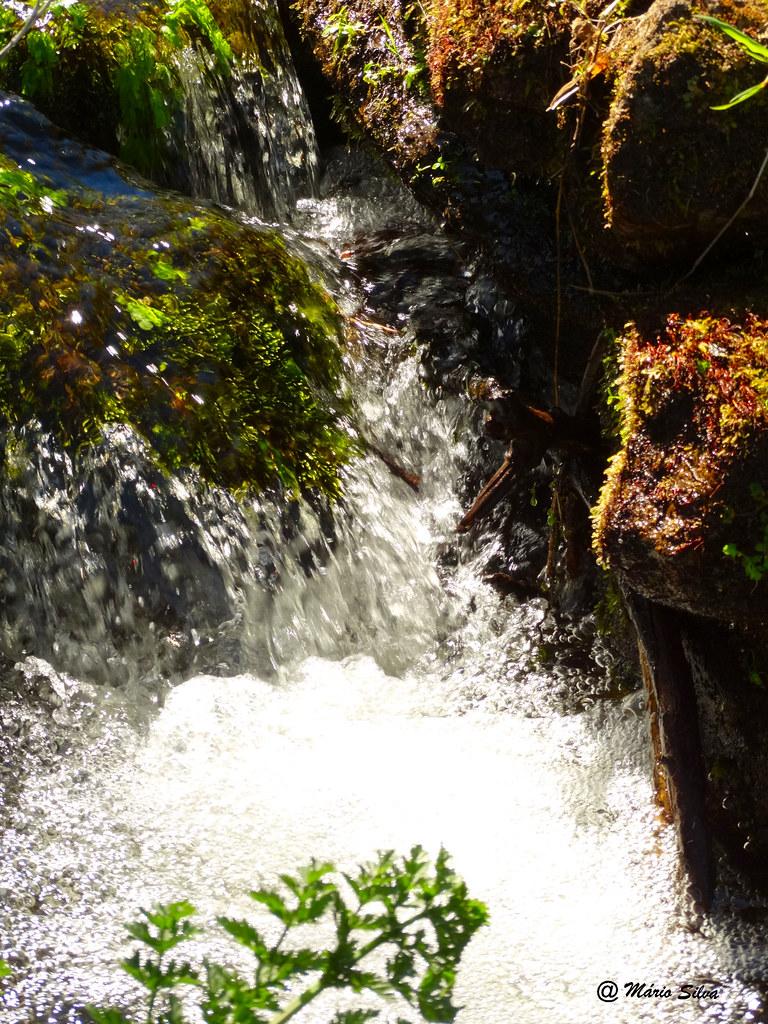 Águas Frias (Chaves) - ... corre agitada a água  cristalina do ribeiro ...