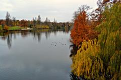 Hyde park (Arantxac1) Tags: park bridge parque trees winter london river londres invierno hydepark
