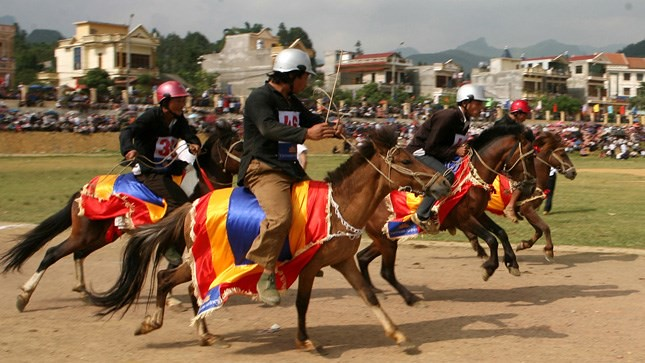 3ngựa kéo xe du lịch ở Bắc Hà là những con ngựa đã từng tham gia vào các giải đua ngựa thuyền thống
