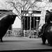 Frankfurt street - riding the bear (and bull) at the stock exchange. Börse