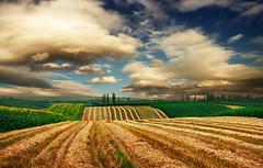 Harvested field too (Katarina 2353) Tags: summer sky landscape serbia x fields vojvodina srbija beska serbiainspired