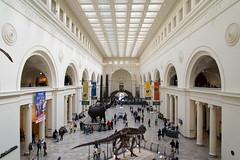 The Field Museum (phil dokas) Tags: chicago skeleton illinois unitedstates dinosaur fieldmuseum sue tyrannosaur
