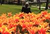 IMG_4185 (Gökmen Kımırtı) Tags: flower tulip 2015 emirgan laleler