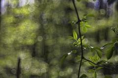 IMG_7602_b (Julie s Photo s) Tags: nature bokeh wald trioplan bokehlicious