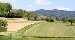 Gundelfingen landscape II (tillwe) Tags: green landscape spring blackforest tillwe rebberg gundelfingen 201605