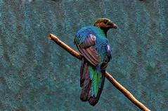 "Bronx Zoo Bird3 (bobrizz1) Tags: bronxzoo newyorkcity nature birds 1001nights 1001nightsmagiccity platinumheartaward allnaturesparadise thebestofmimamorsgroups "" nature'splus soe magicmomentsinyourlifelevel1 magicmomentsinyourlifelevel2 magicmomentsinyourlifelevel3"