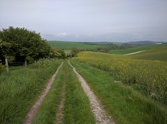 The South Downs (Henry Hemming) Tags: park panorama field way downs track view path south seed national download oil flint lewes