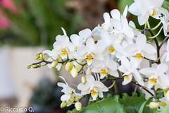 _DSC9261.jpg (Riccardo Q.) Tags: macro fiori fiore altreparolechiave floreka