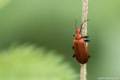 DN9A8558 (Josette Veltman) Tags: macro nature canon bug natuur bugs photowalk lente zwolle landschap insecten ivn westerveldsebos photowalkzwolle