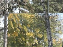 ciel double (Roberto Urios) Tags: paris boulogne jardin bois parigi acclimatation