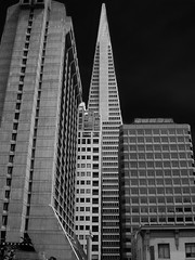 Financial District, San Francisco (andbog) Tags: sanfrancisco california ca city blackandwhite bw usa building monochrome architecture skyscraper buildings lowresolution cityscape unitedstatesofamerica ps bn casio financialdistrict pointandshoot states westcoast architettura transamericapyramid lowres biancoenero palazzi edifici compactcamera qvr40 casioqvr40