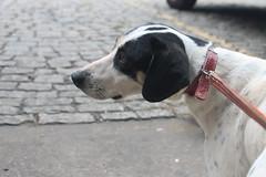 IMG_1477 (Mila Santa's Photography) Tags: cats dogs canon photography gatos ces cachorros fotografia animais ong srd adoo unibh adotartudodebom fotografiasolidaria caopartilhe caopartilheong feiradeadocao