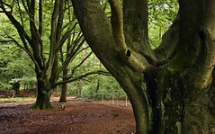 Natural structures (M a u r i c e) Tags: trees green nature netherlands forest leaf woods branches twigs efs1022mm