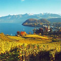 spiez (thomasw.) Tags: 120 mamiya analog schweiz switzerland europa europe fuji cross suisse suiza mf bern svizzera crossed spiez berneroberland