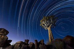 Kcherbaum und startrails - Giants' Playground (daniel.osterkamp) Tags: afrika asphodeloideae kokerboom kcherbaum mountain namibia star stars africa afterglow aloe aloedichotoma astronomy blue dichotoma effect exposure giantsplayground landscape landscapephotography light lighttrail long longexposure moon mount nature night orientation quivertree rocks safari silhouette sky south startrail starry startrails stones sunrise sunset time tourism trails tree