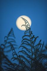 Full moon (Florian Btow) Tags: blue moon night rising full hour farn 135mm