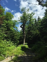 IMG_1748 (daach14@sbcglobal.net) Tags: usa vermont nature outdoor green photo trip travel sky blue woods trees forest beauty life moutain rock rocks view iphone6 panorama