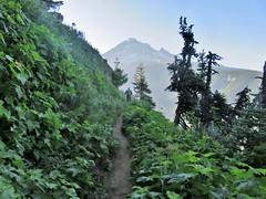 On Bald Mountain (dinannee) Tags: mountain foliage trail mthood mountainside baldmountain